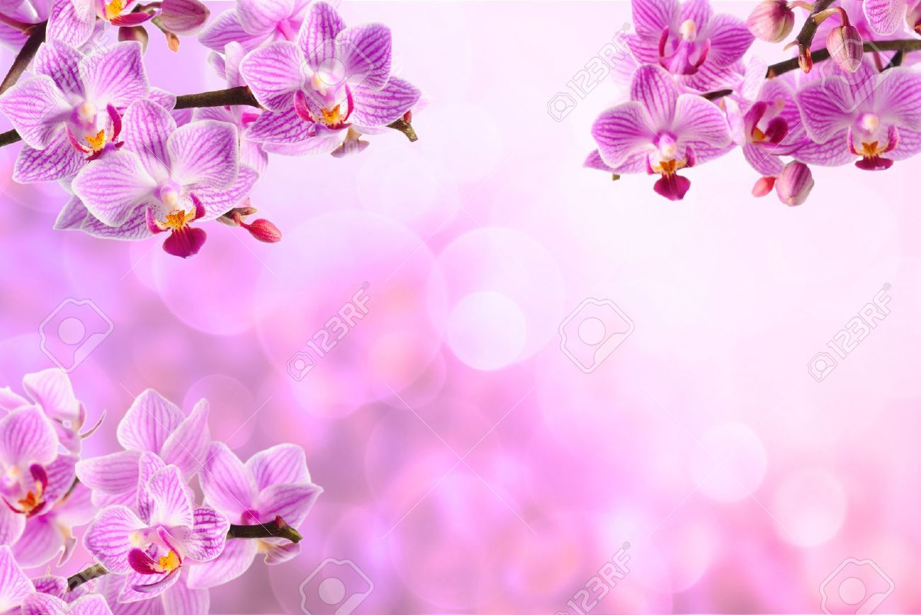 Pink Beauty Orchid On The Pink Background Stock Photo Picture And