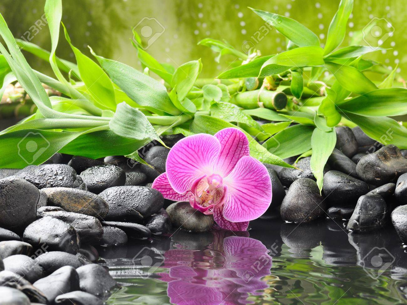 spa concept with zen stones and orchid Stock Photo - 11012103