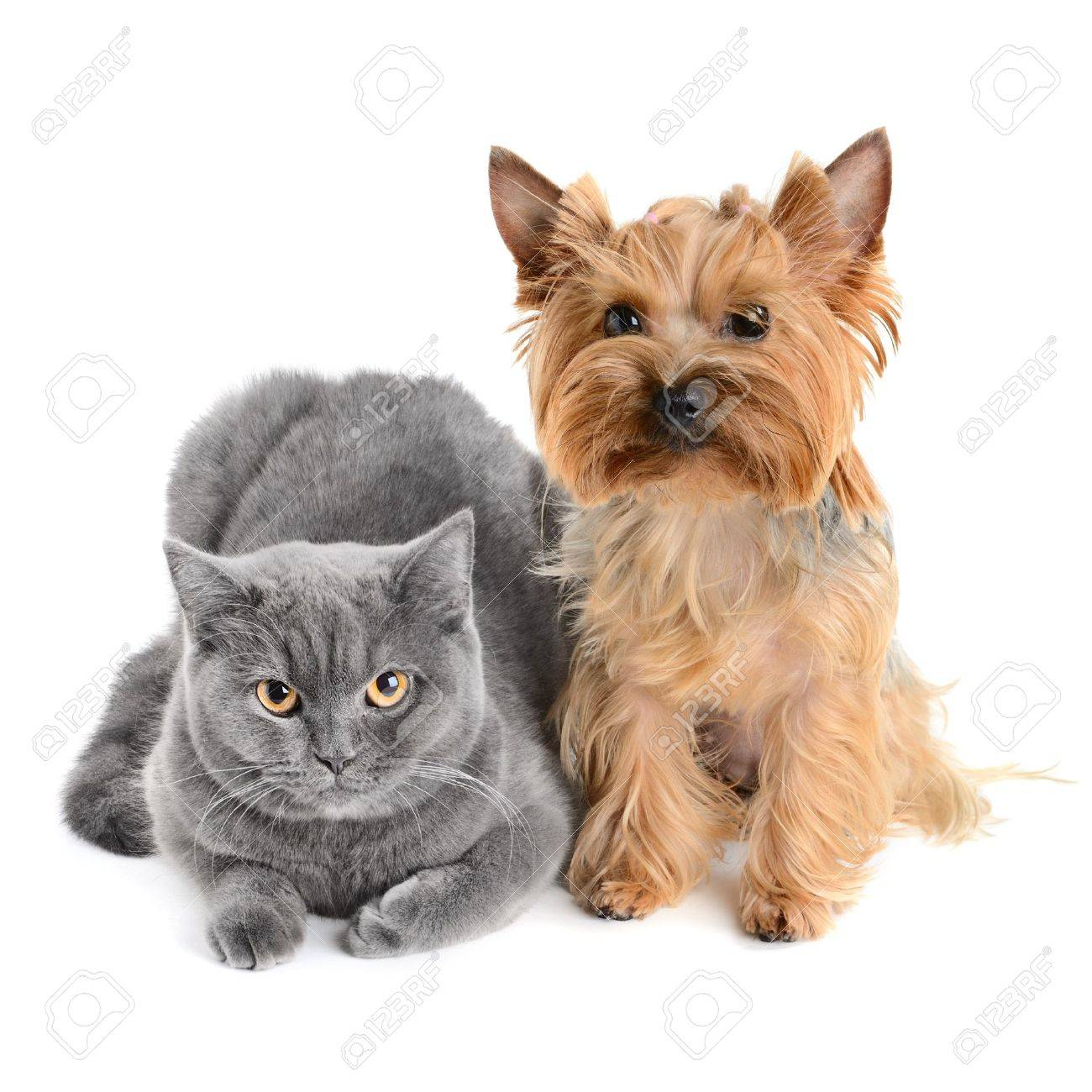 cat and dog isolated on white background Stock Photo - 11157952