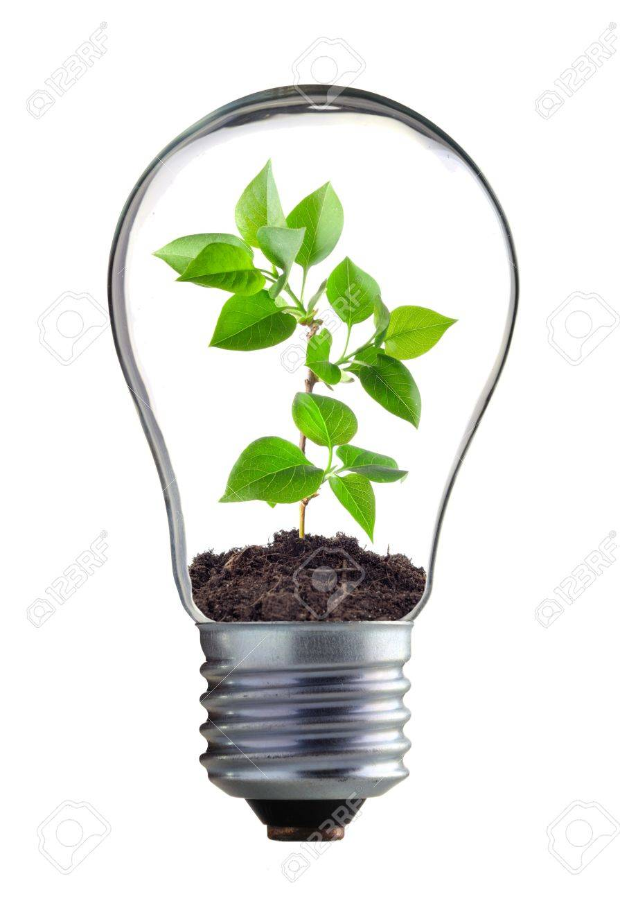 plant in the lamp on the white background Stock Photo - 12881403