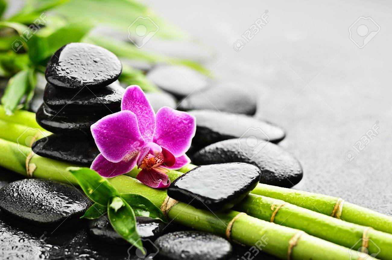 Zen Basalt Stones And Orchid With Dew Stock Photo Picture And Royalty Free Image Image 13308015