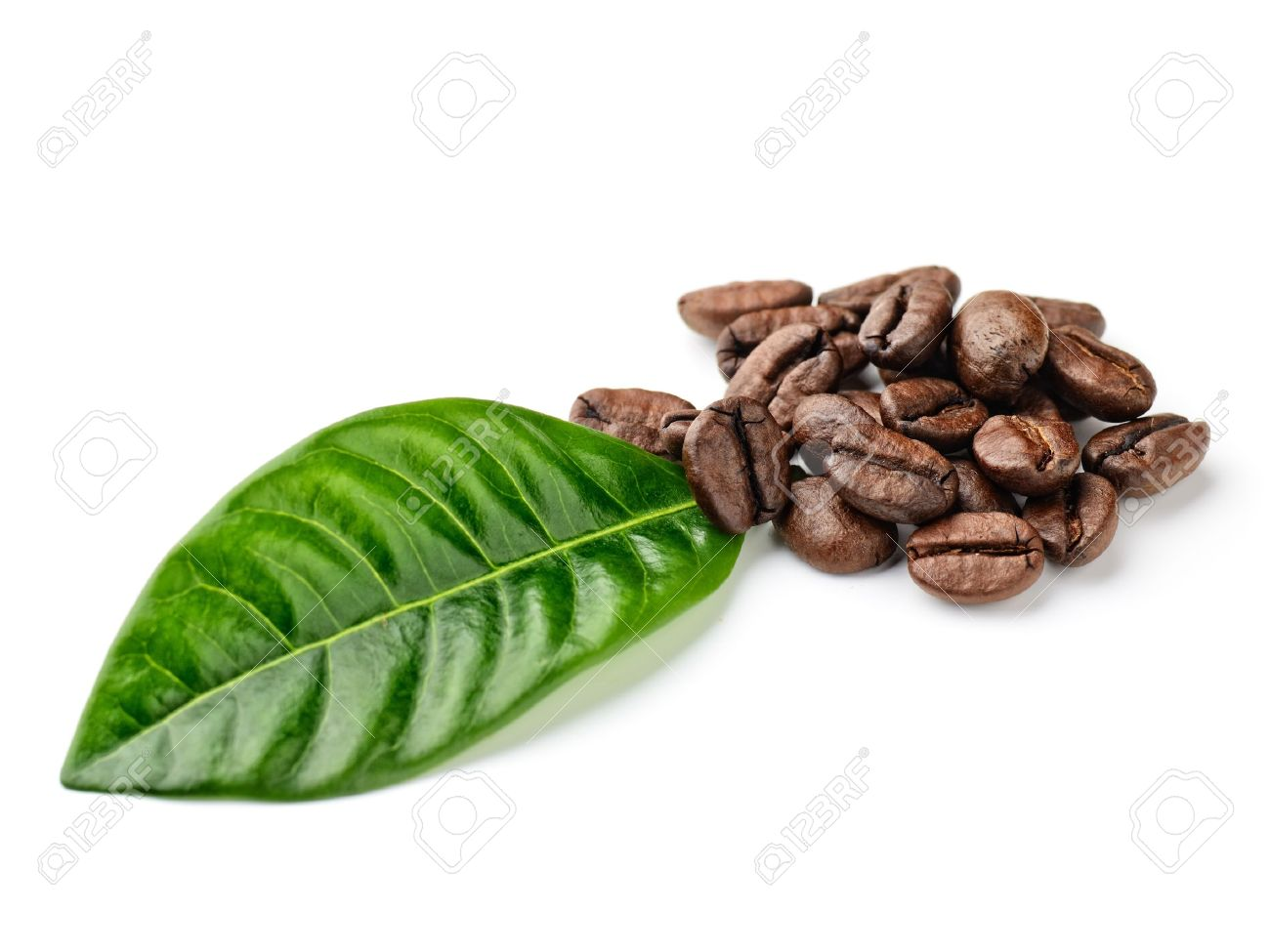 coffee grains and leaves Stock Photo - 13614360
