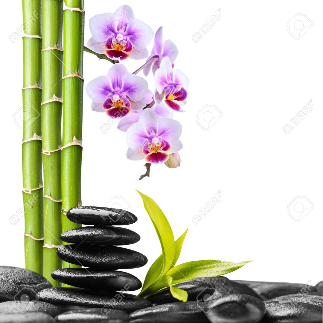 Orchidee Und Bambus Auf Den Zen Basaltsteinen Isoliert Auf Weissem