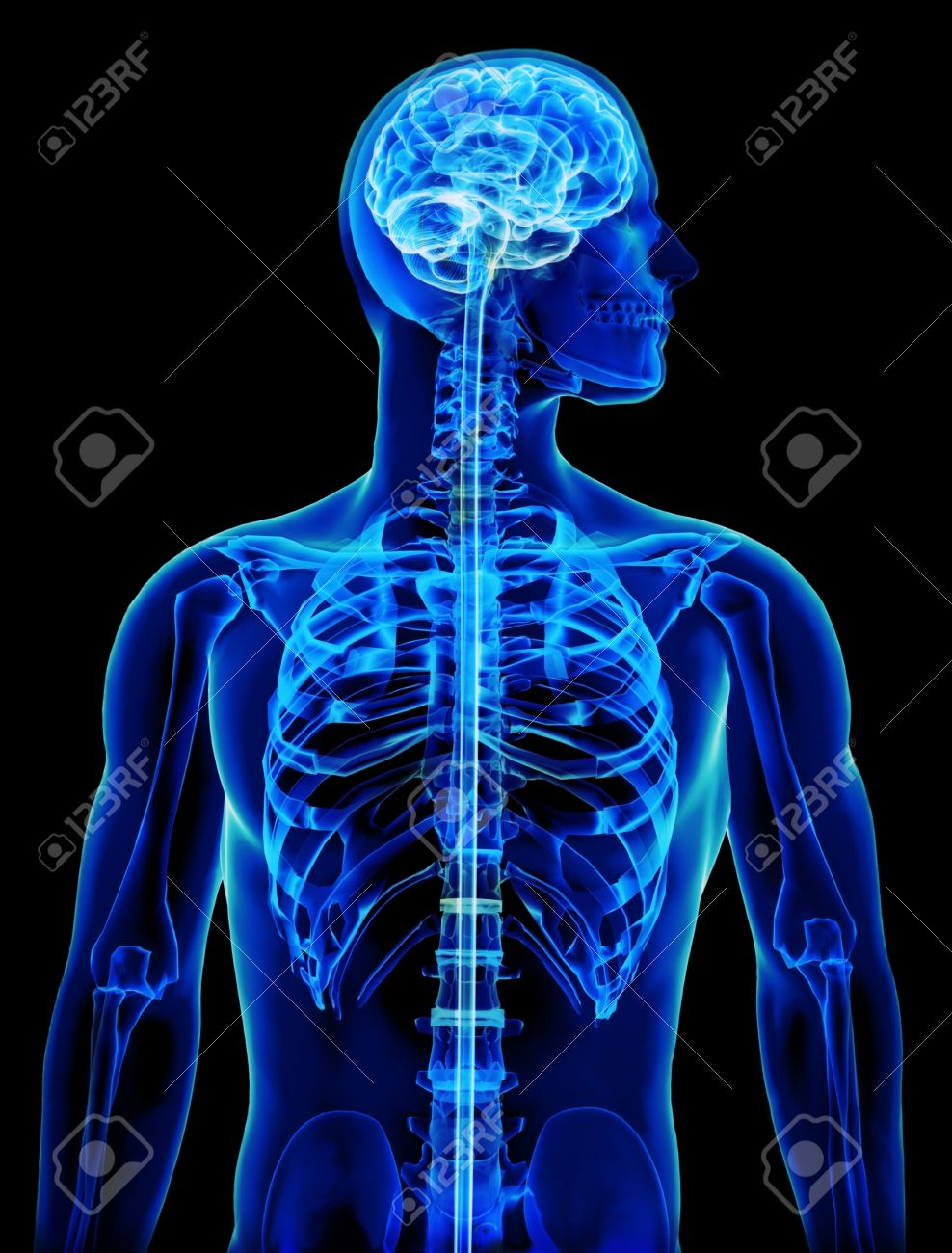 Röntgen Mit Gehirn Und Rückenmark Konzept Lizenzfreie Fotos, Bilder ...