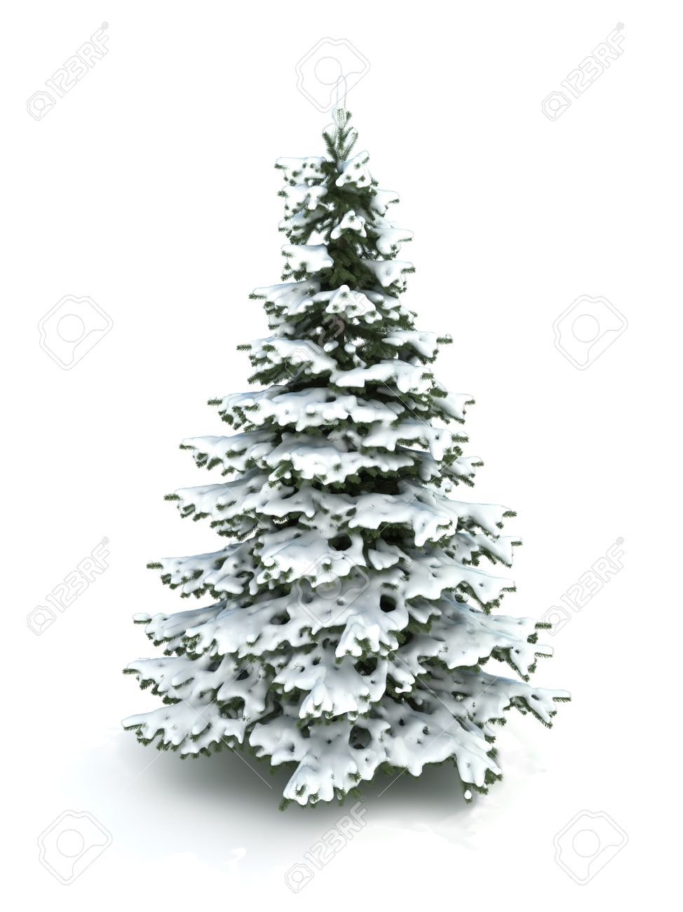 Spruce Tree Christmas Tree Covered With Snowisolated On A Stock