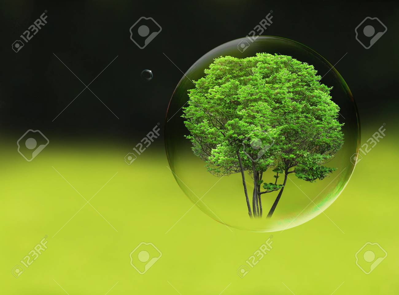 Tree in a bubble, room for text or copy space Stock Photo - 19585930