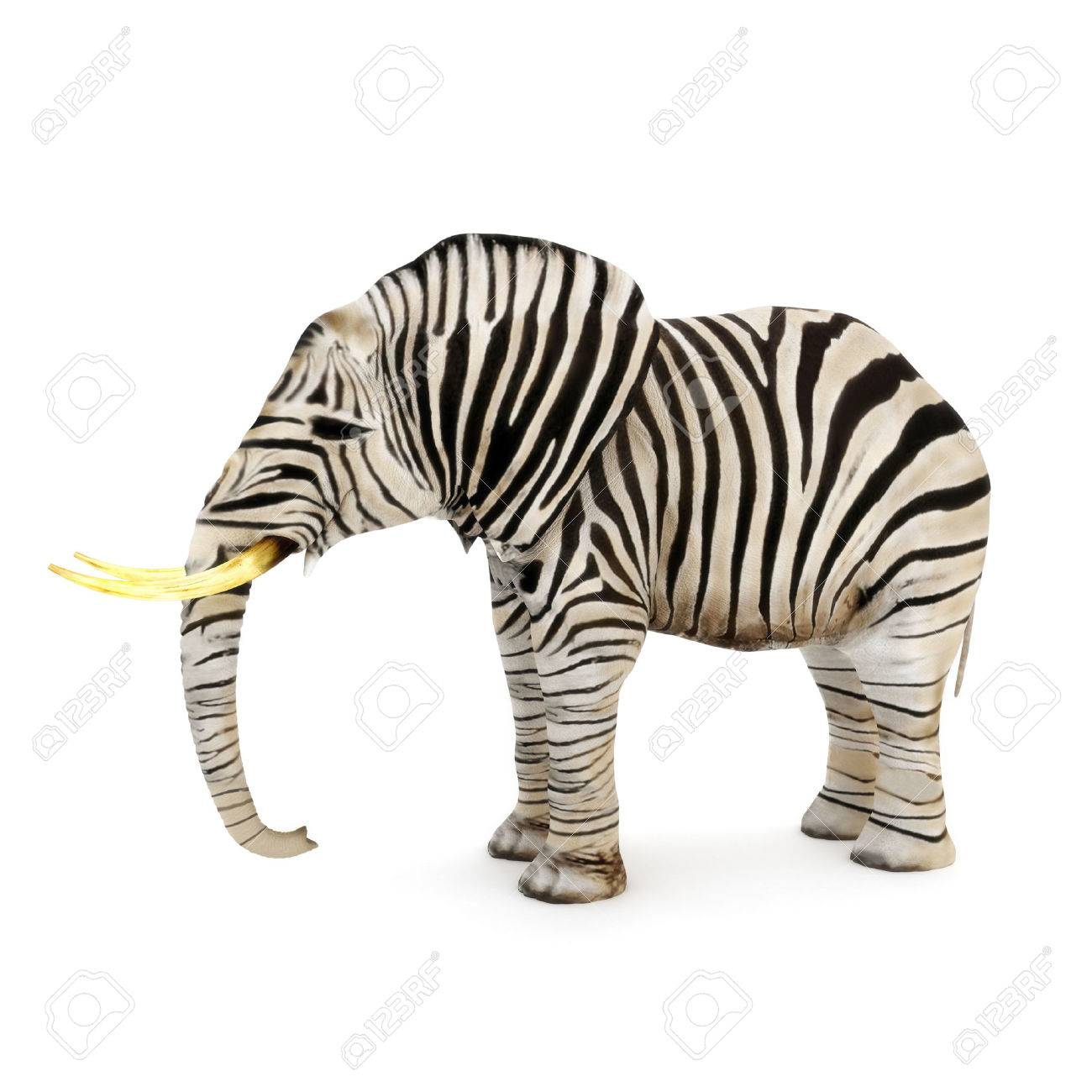 Different, Elephant with zebra stripes on a white background - 30181911