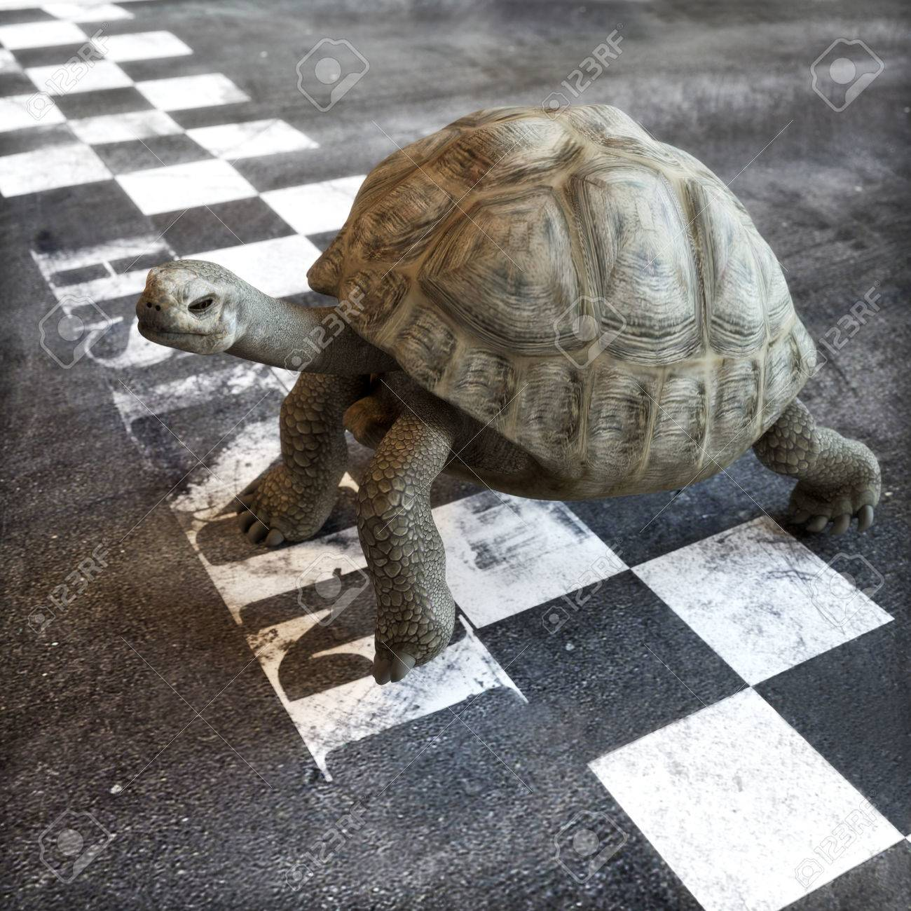 Slow Turtle Crossing >> Slow And Steady Wins The Race A Turtle Crossing The Finish Line