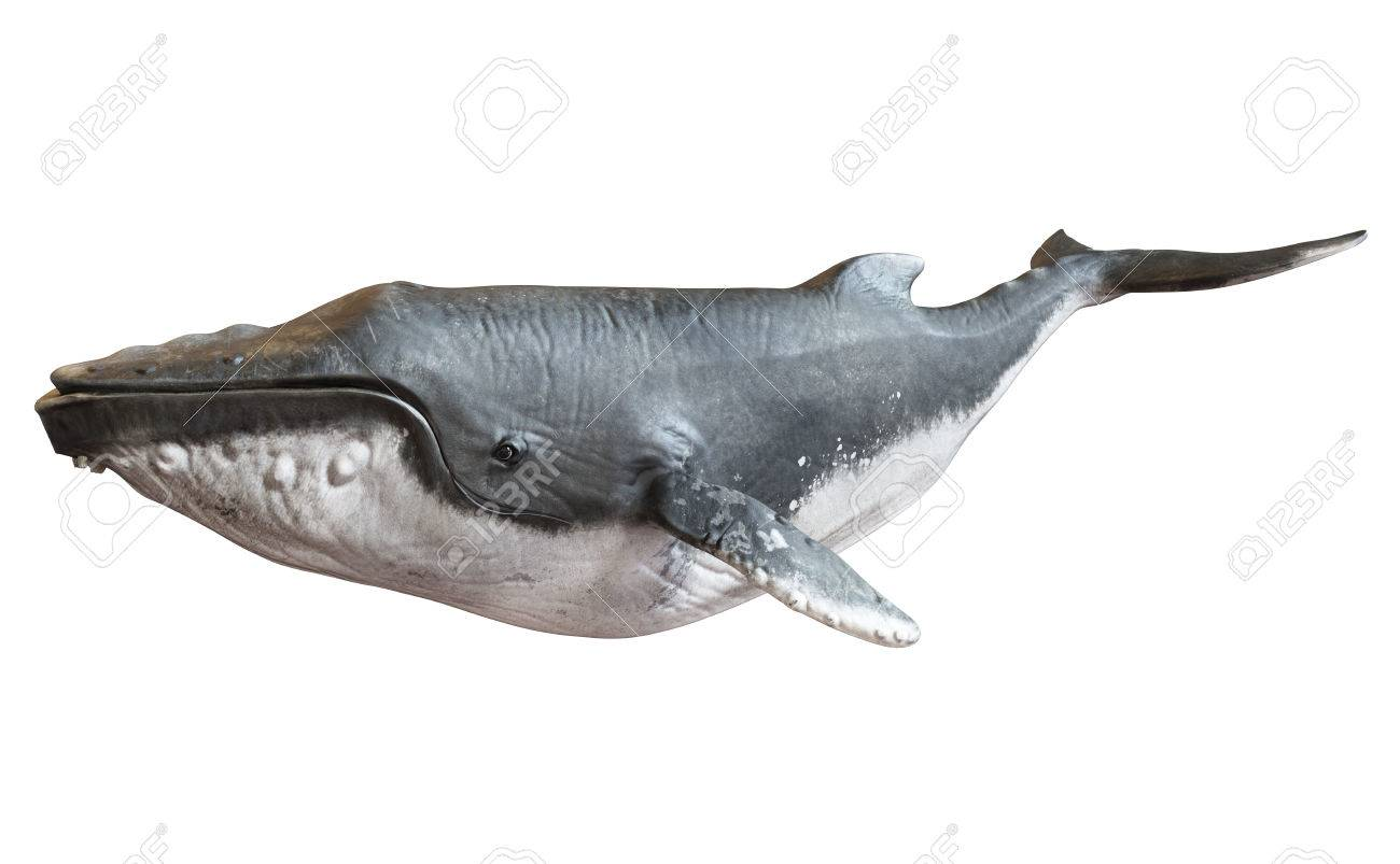 Humpback whale on an isolated white background. 3d rendering Standard-Bild - 64797333
