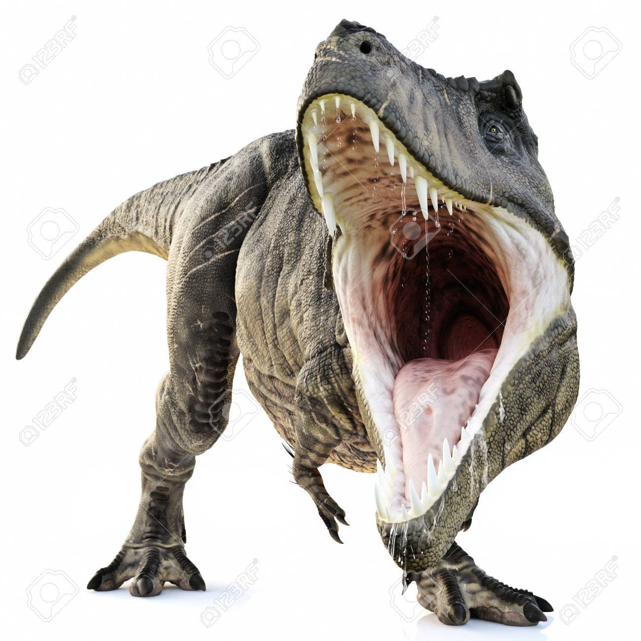 A tyrannosaurus rex attack on an isolated white background stock a tyrannosaurus rex attack on an isolated white background 3d rendering stock photo 70202937 altavistaventures Gallery