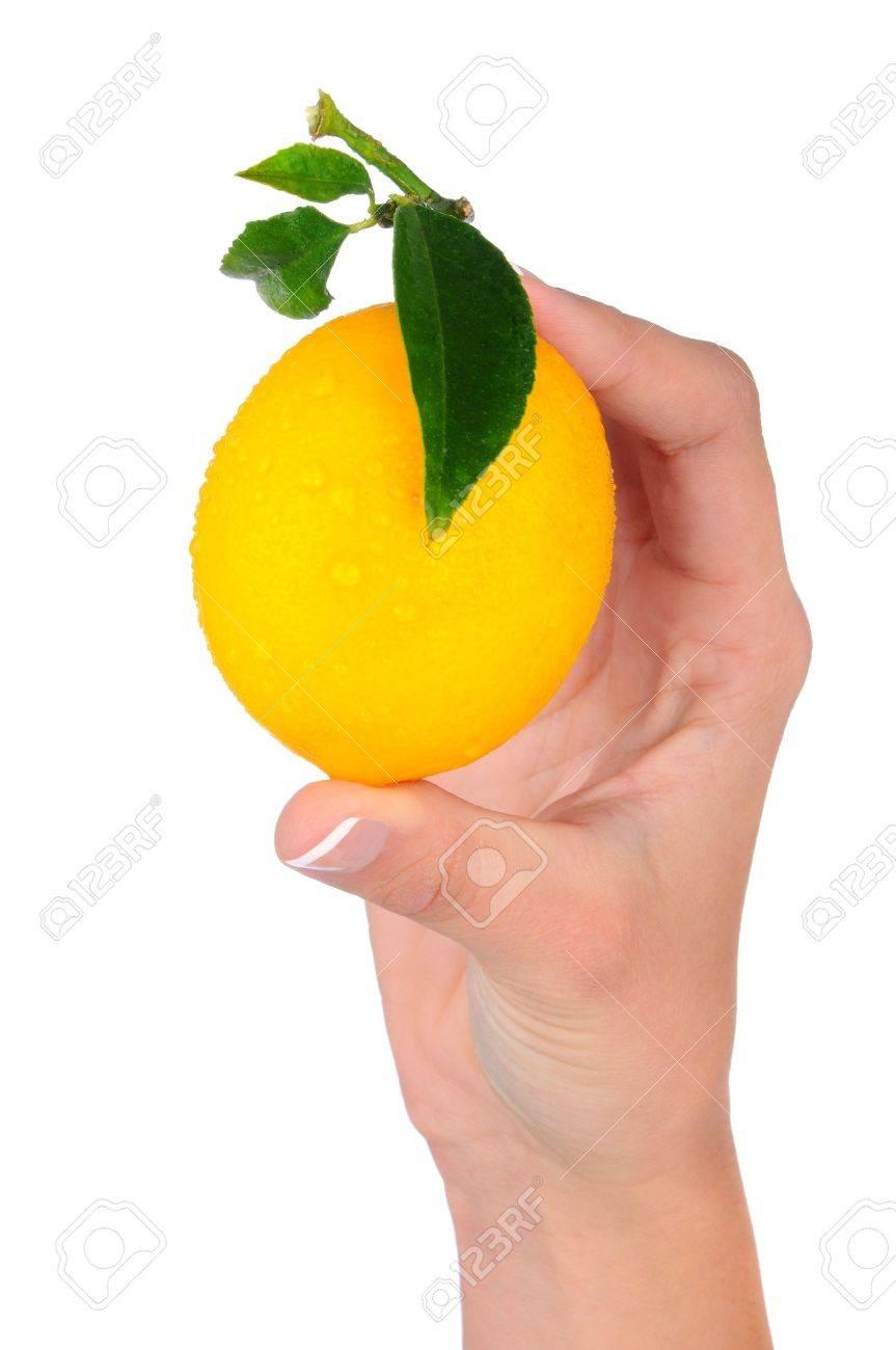 Fresh Picked Lemon