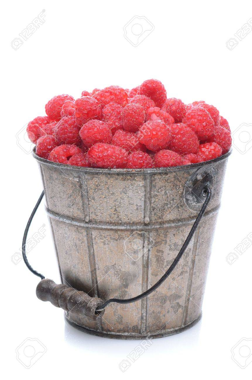 A pail full of freshly picked raspberries. Vertical format isolated on a white background with slight reflection. Stock Photo - 13467399