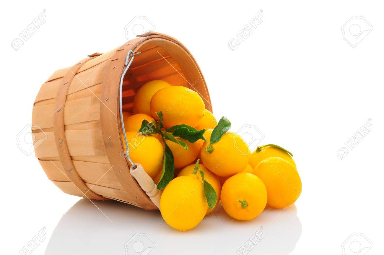 A basket full of fresh picked lemons on its side with fruit spilling out. Horizontal format isolated on white with reflection. Stock Photo - 17115326