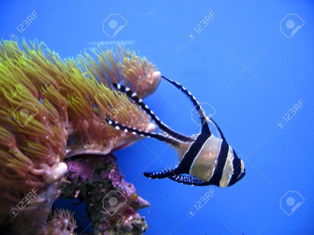 Tropical exotic fish Stock Photo - 10717760