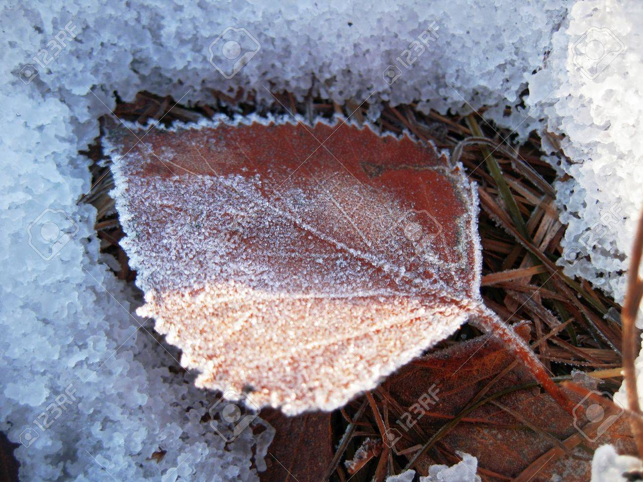 Red frozen leaf and cold winter morning Stock Photo - 11595719