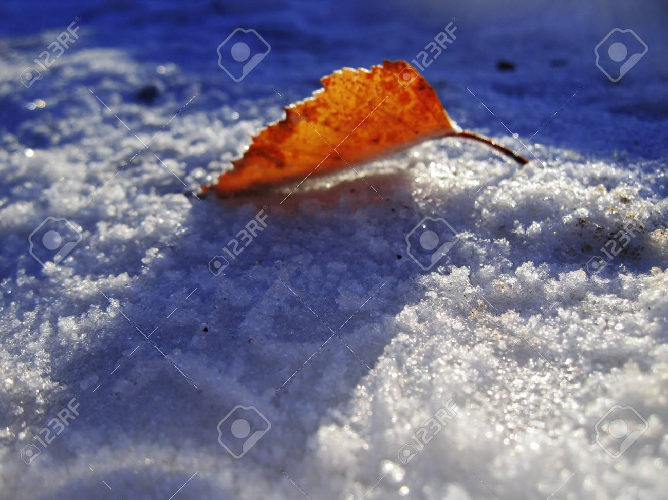 Red frozen leaf and cold winter morning Stock Photo - 11595641