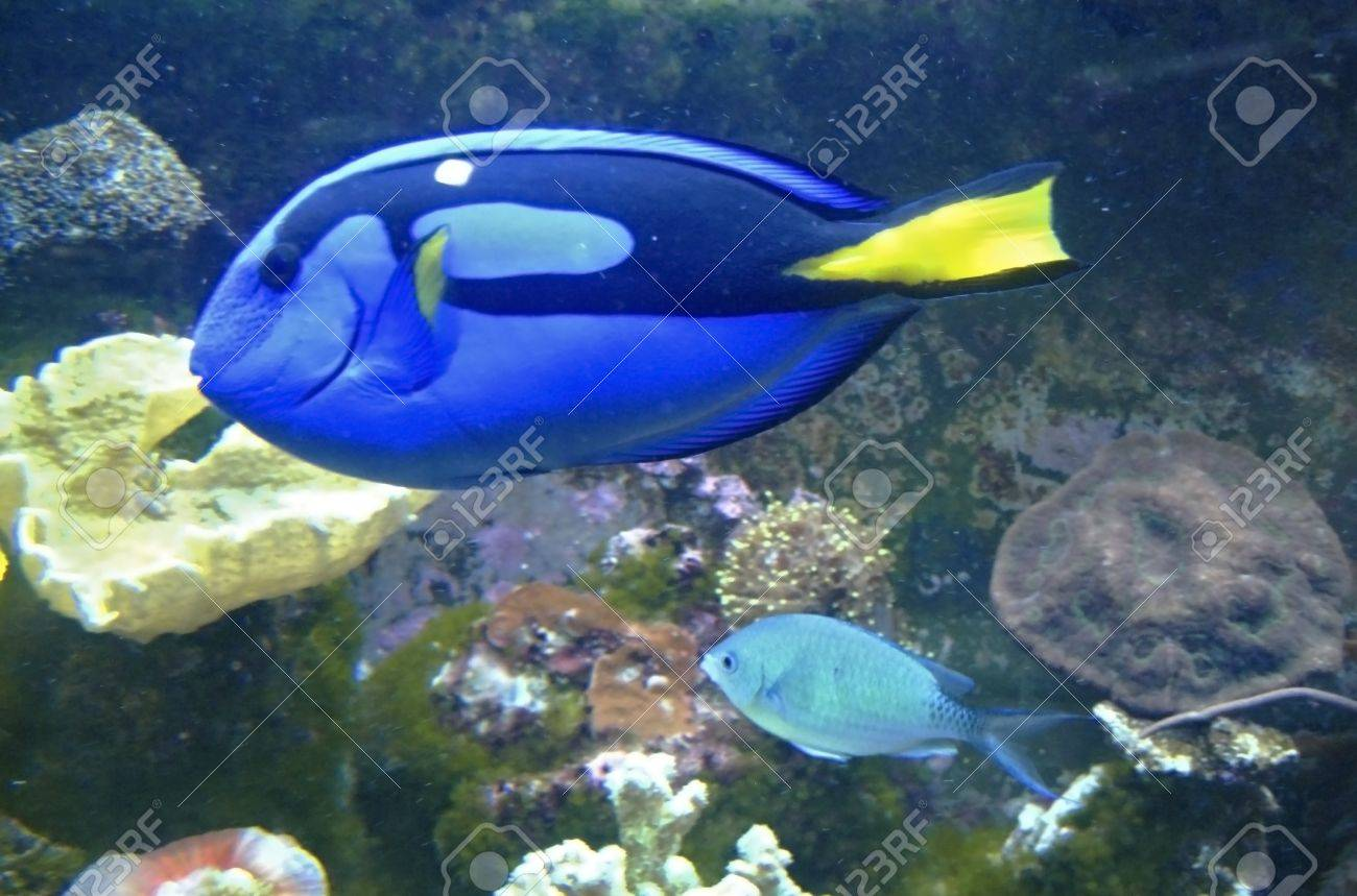 Tropical exotic fishes underwater on the bottom Stock Photo - 12050122