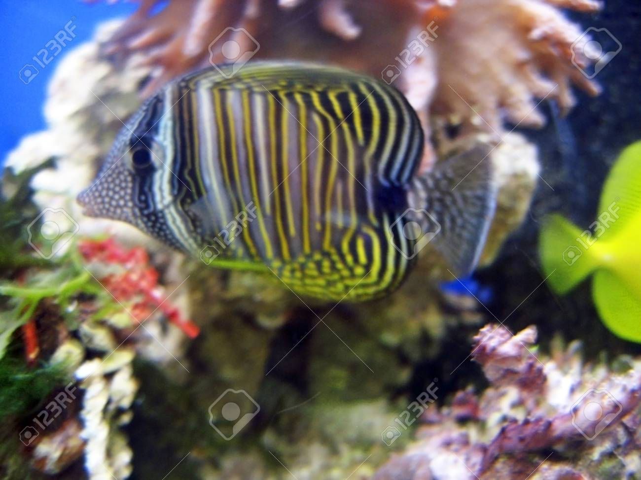 Tropical exotic fishes underwater on the bottom Stock Photo - 12050139