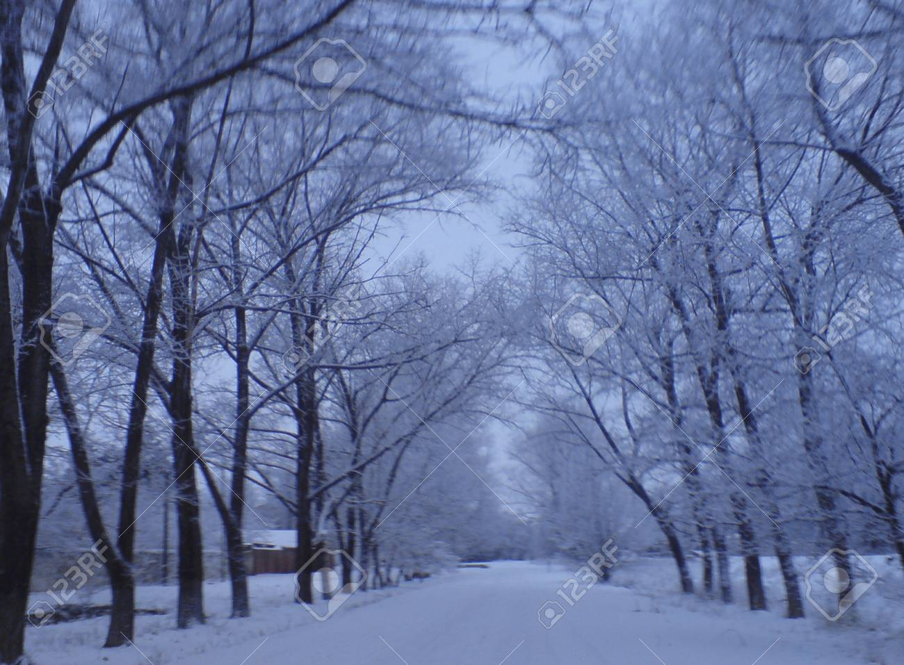 Frozen road between the tree alley lead to nowhere Stock Photo - 12659942