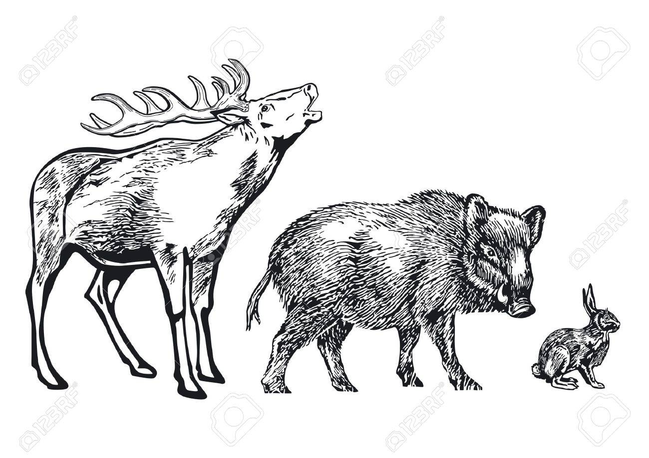 forest Animals Stock Vector - 11664050