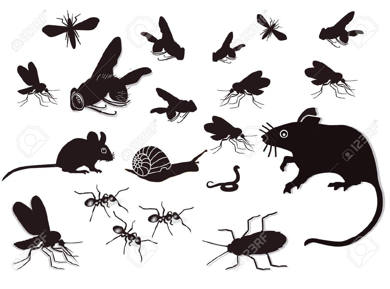 害虫や害獣 ロイヤリティフリー...