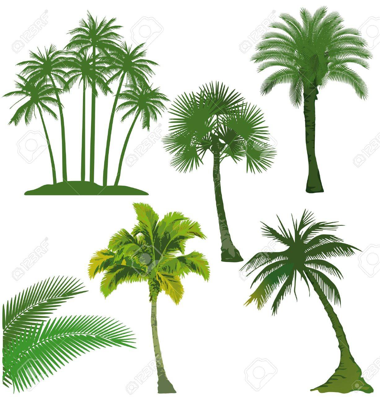 Palm Oil Tree Drawing Palm Oil Set of Palm Tree
