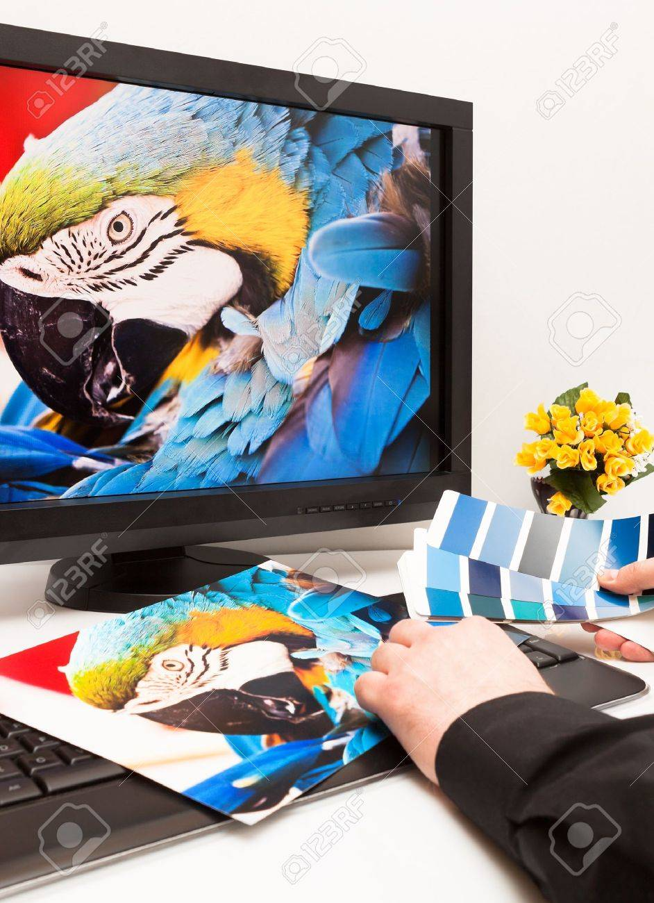 Graphic designer at work  Color samples  Blue parrot macaw bird photo Stock Photo - 17541516