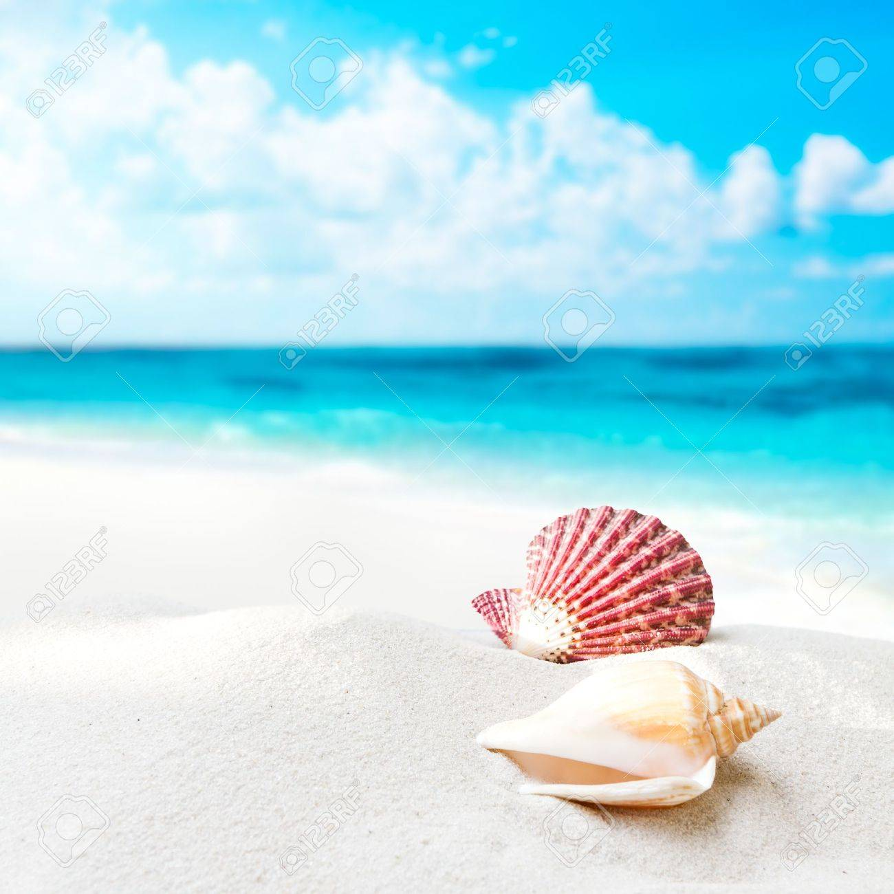 Shell on the beach Stock Photo - 18732835