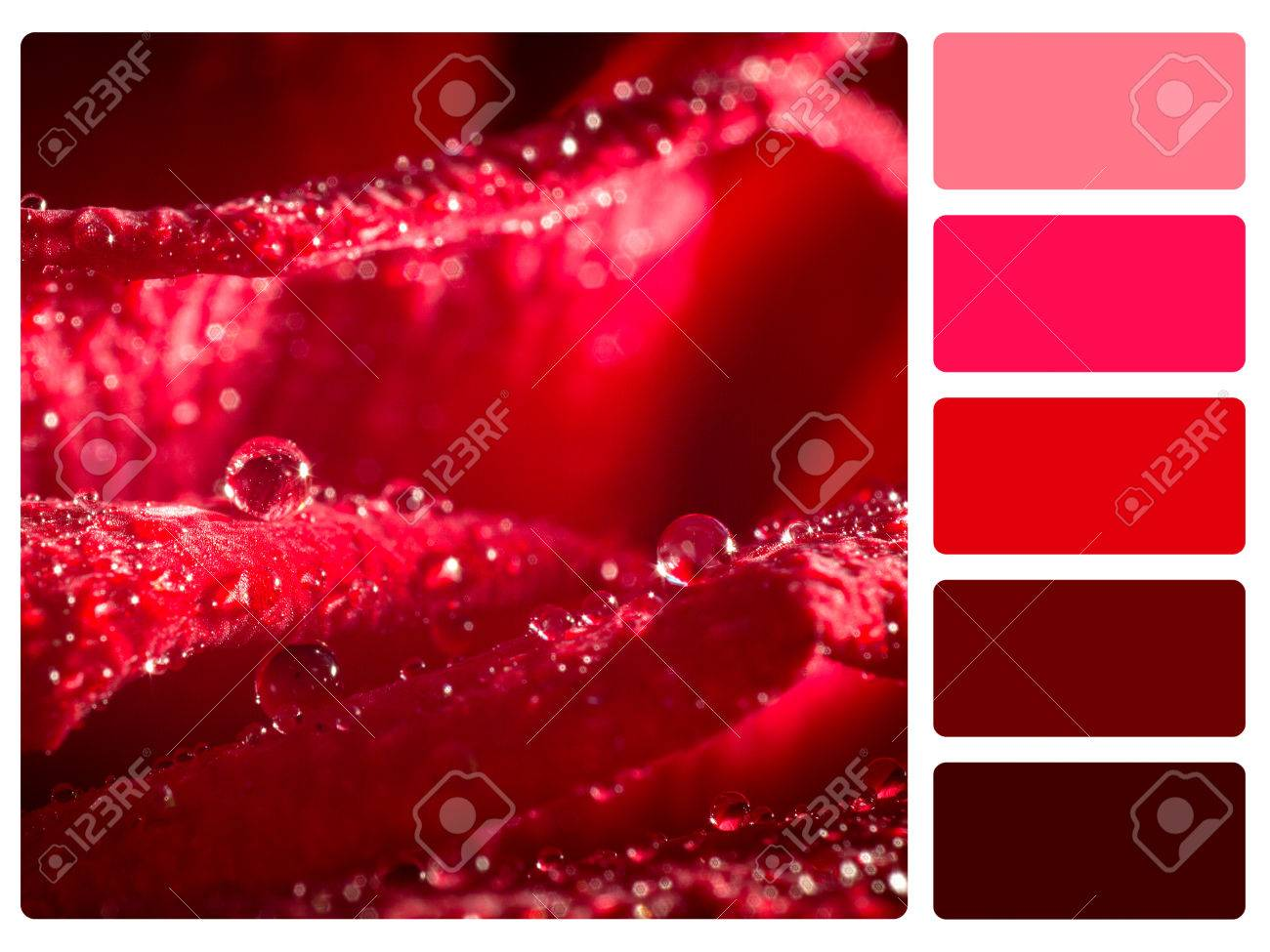 Colour Palette With Complimentary Swatches Red Rose Backgrounds