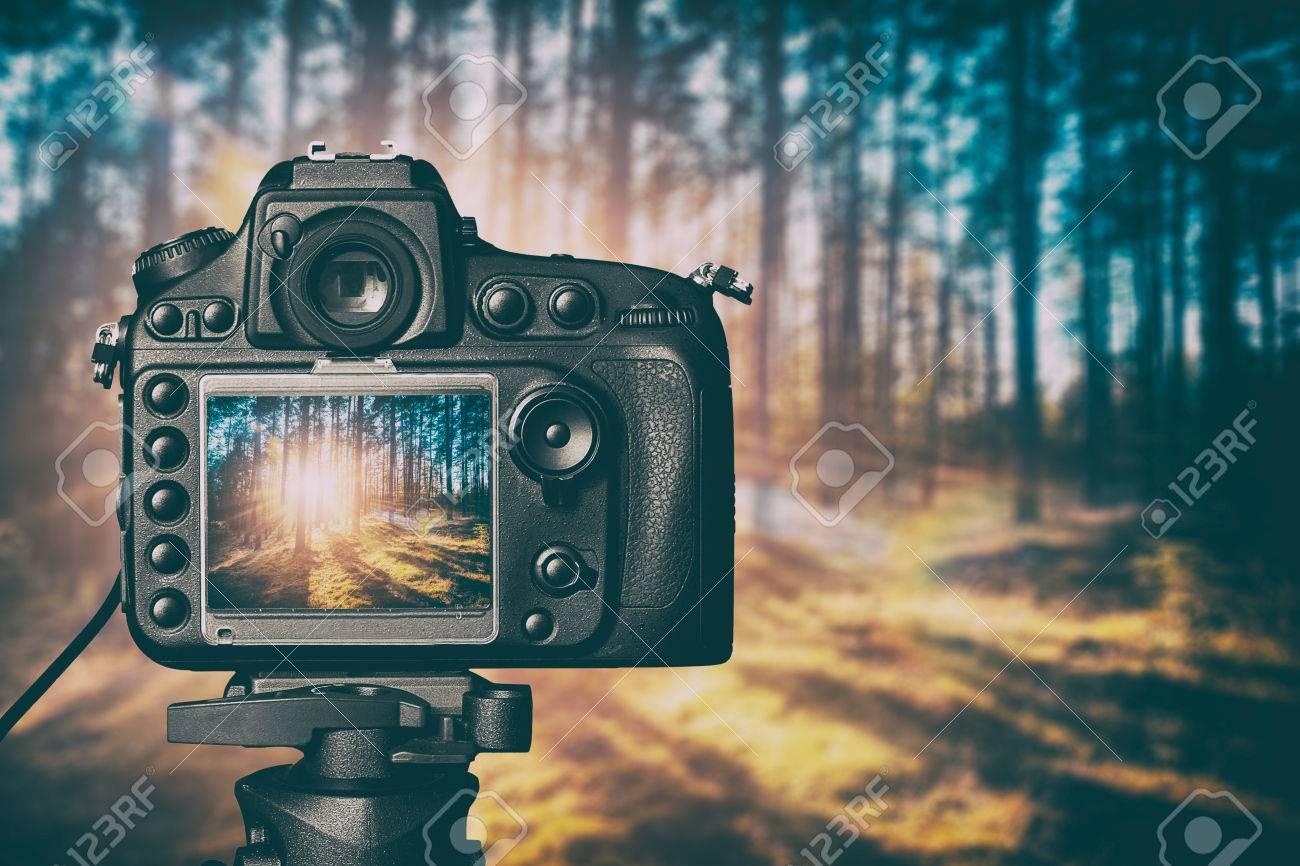 photography view camera photographer lens lense video forest tree photo digital glass blurred focus landscape photographic color concept sunset sunrise sun light - stock image - 64976807