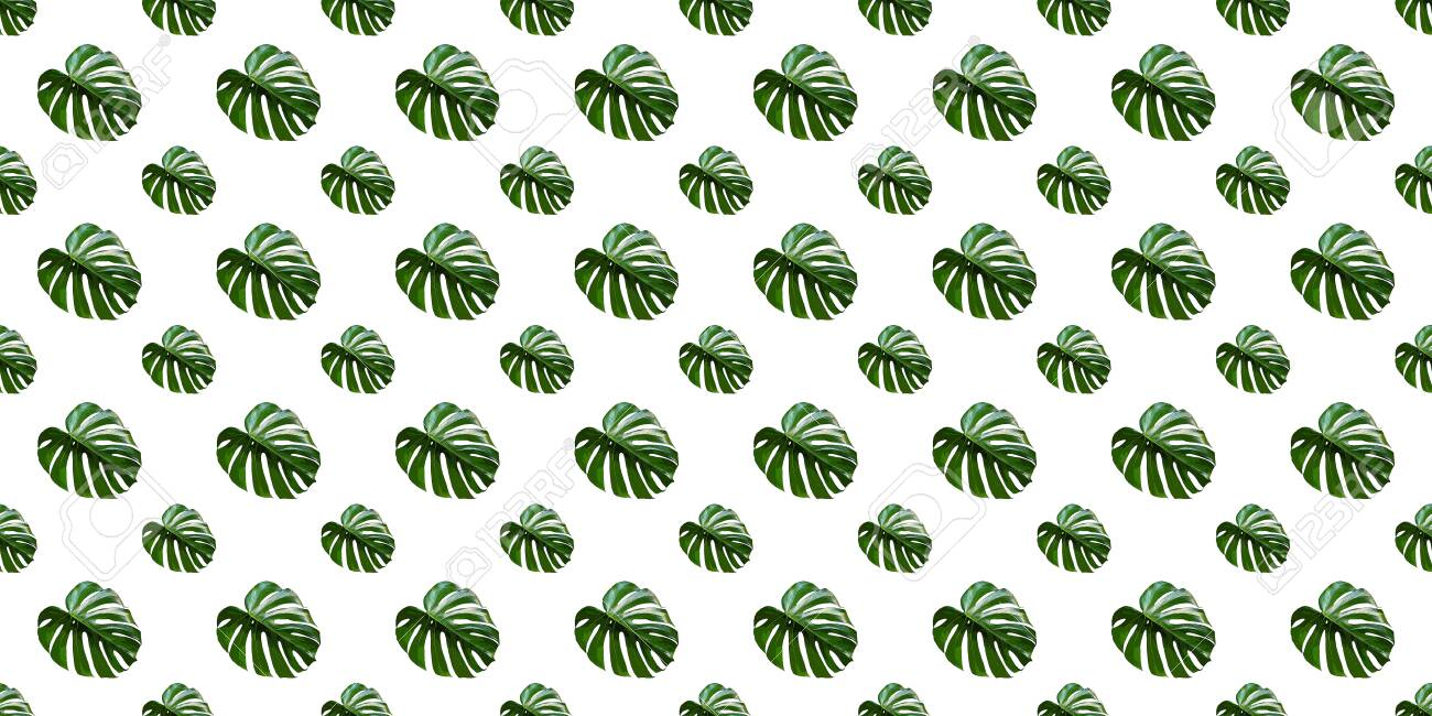 Monstera Deliciosa leaf seamless pattern. Modern tropical background with jungle plants. Green exotic pattern with palm leaves - 150022454