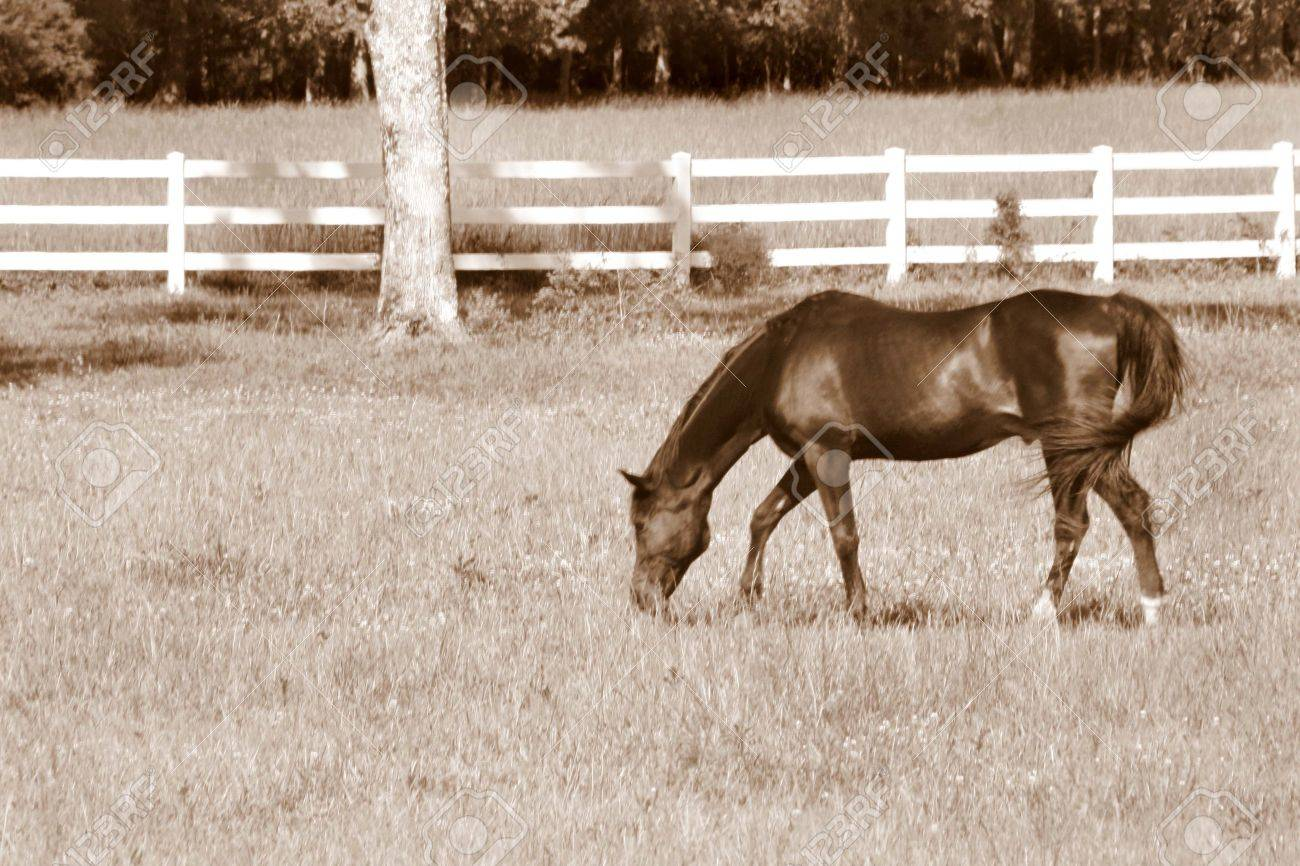 Pretty Black Horse N Sepia Stock Photo Picture And Royalty Free Image Image 10385474