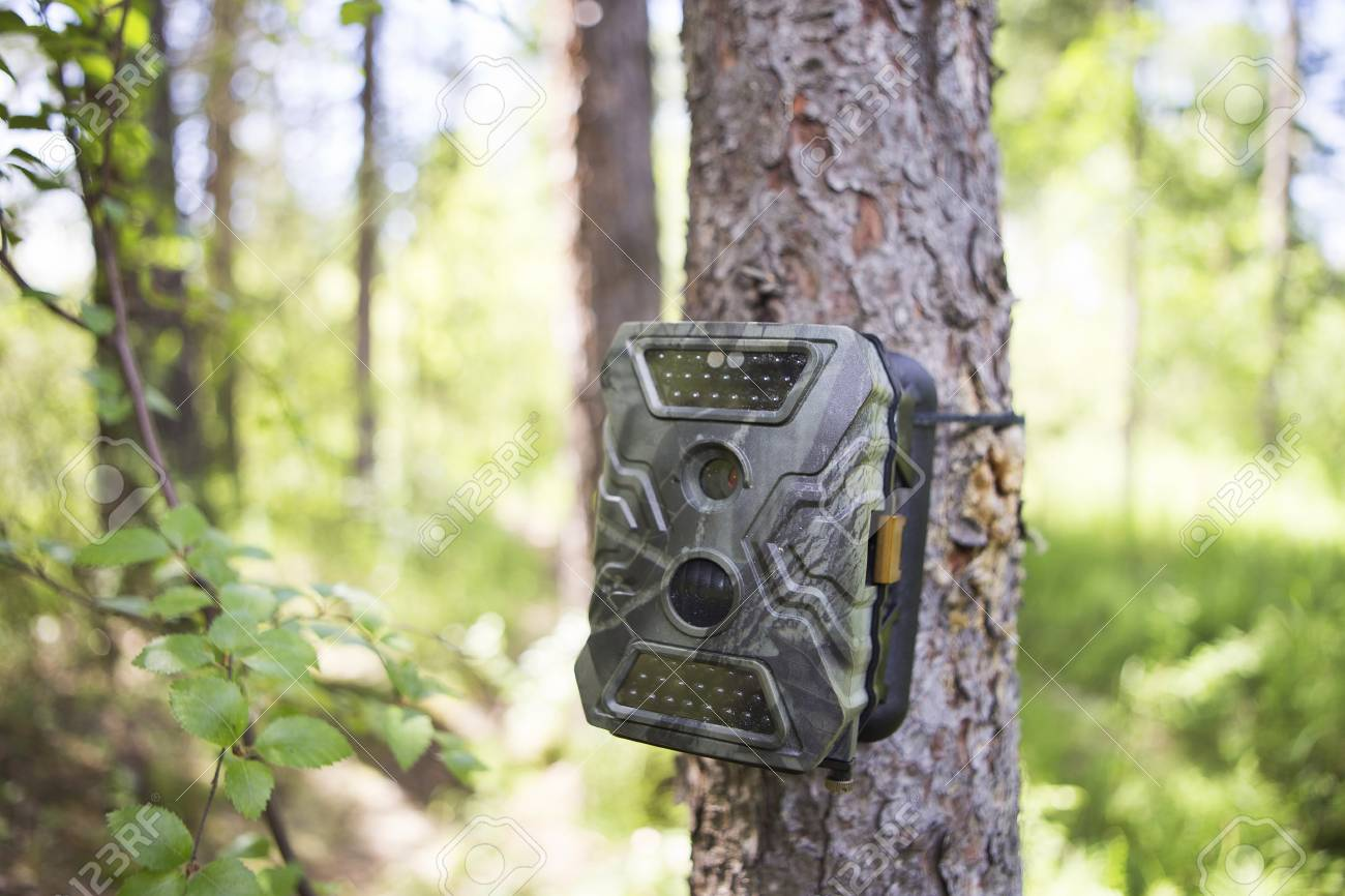 Camera traps with infrared light and a motion detector attached