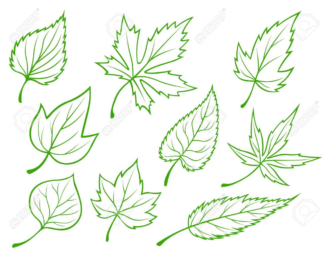 Set of green leaves silhouettes isolated on white background Stock Vector - 13098039