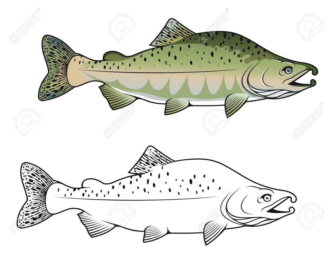 Hunchback salmon fish in color and monochrome versions Stock Vector - 14400027
