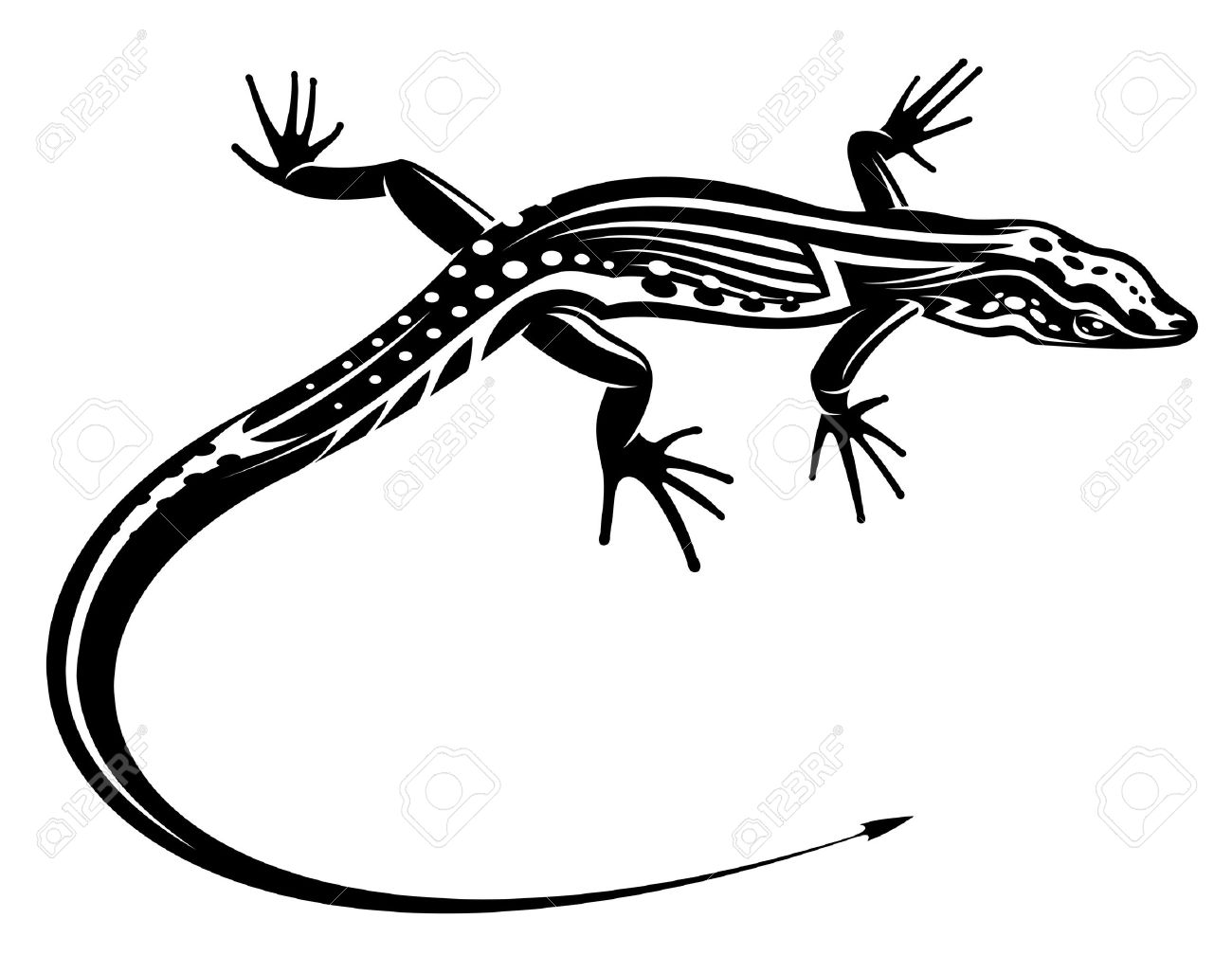 salamander stock photos royalty free salamander images and pictures