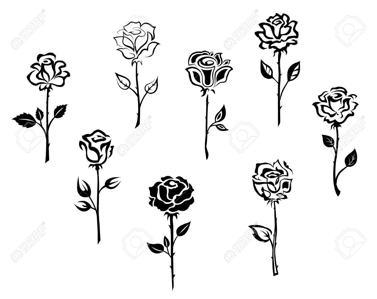 Rose flowers set isolated on white background for holiday or retro design Stock Vector - 16441921