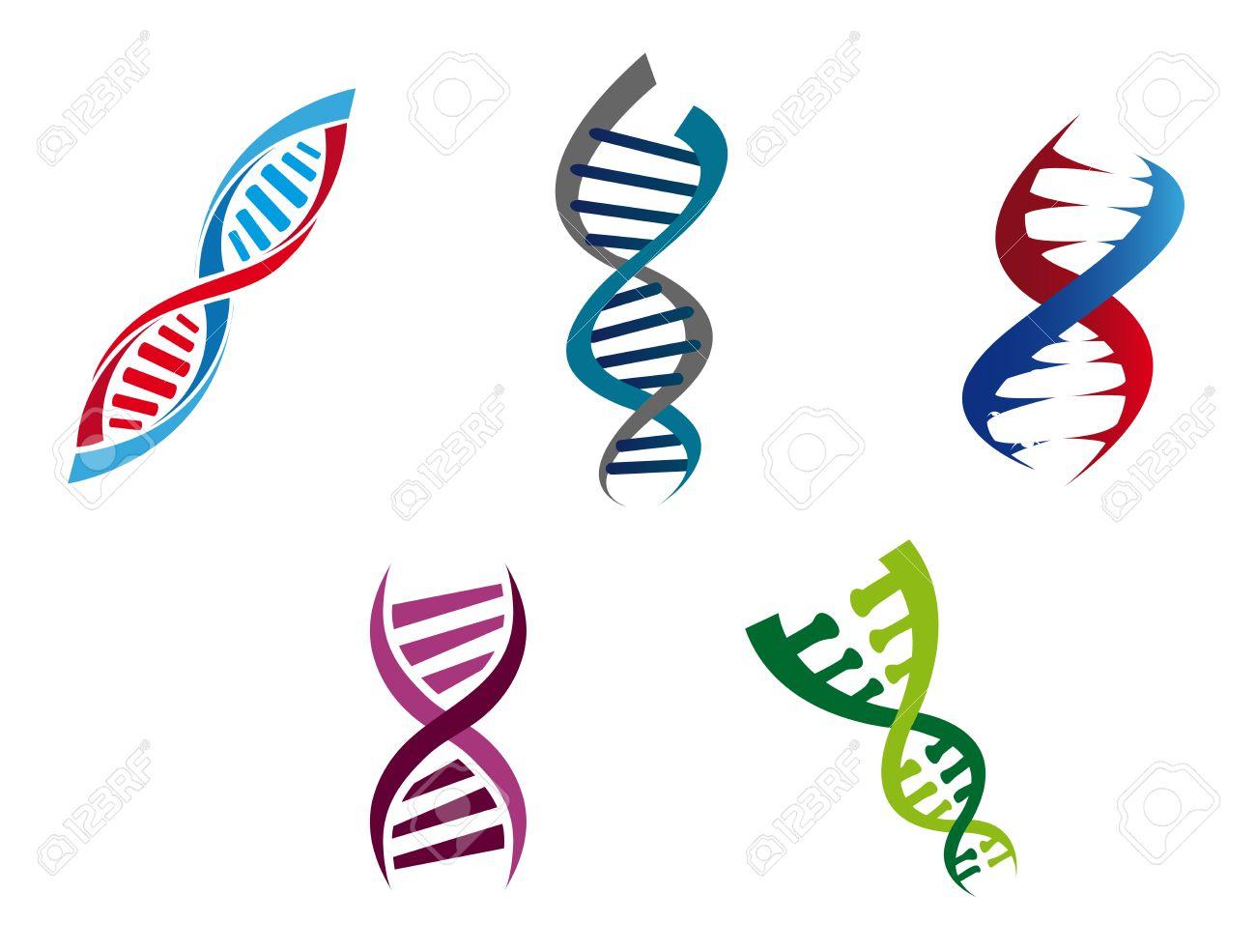 Ilustración De Dibujos Animados De Las Cadenas De Adn De Colores Con Su Estructura Helicoidal En Espiral De Nucleótidos Genéticos Cinco Variantes