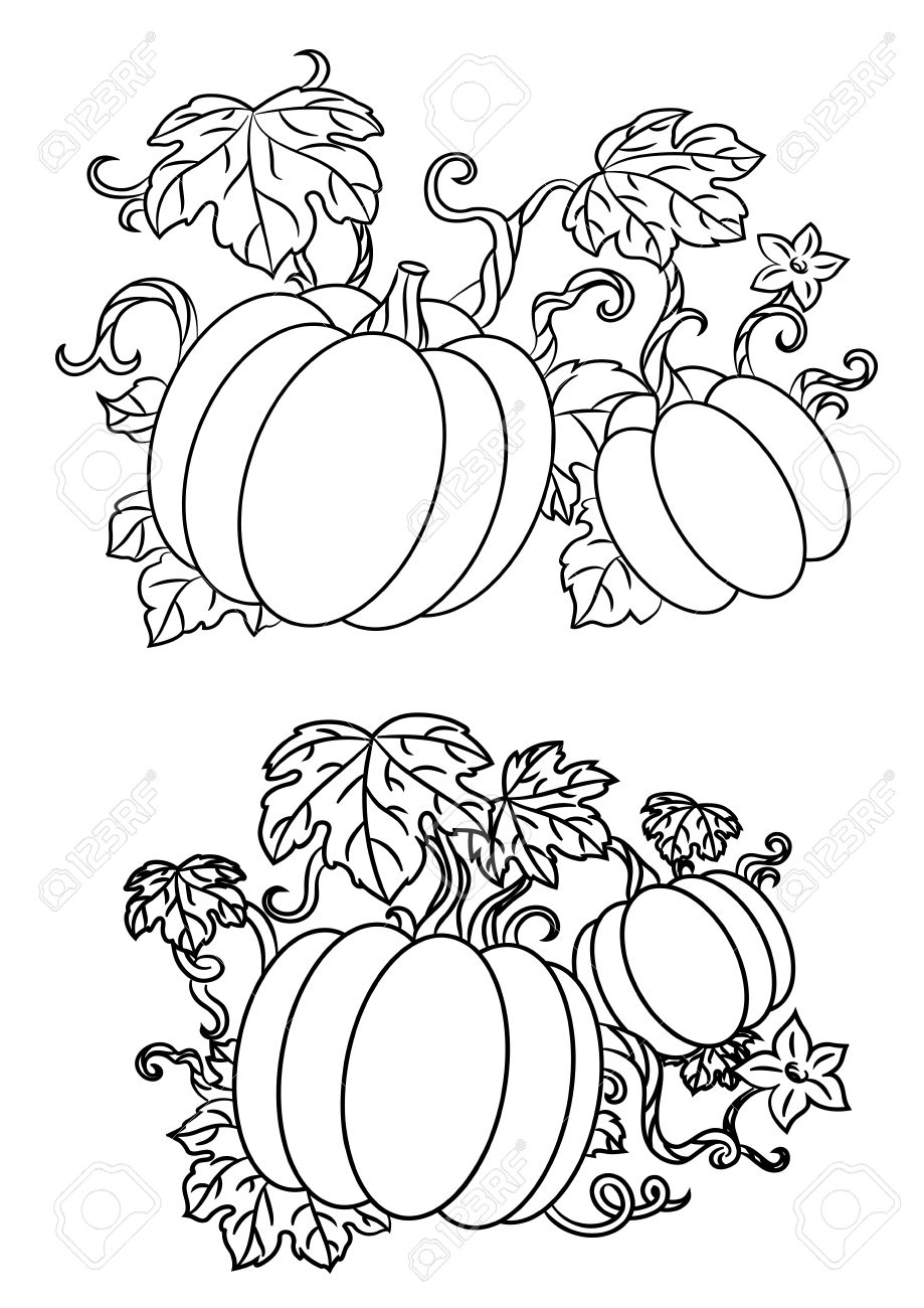 Black And White Line Drawings Of Pumpkins Growing On Trailing ...