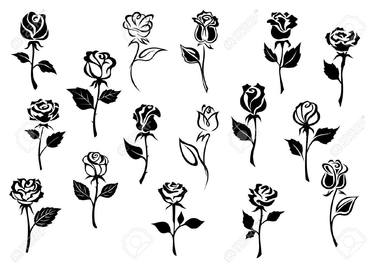 Line Art Flower Design : Black and white elegance roses flowers set for any floral design