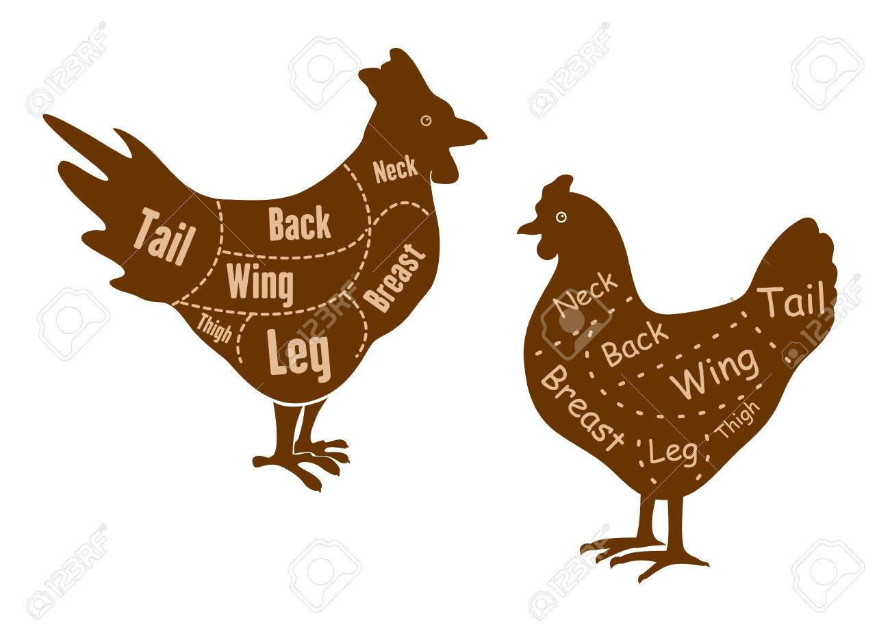 Rooster Good Diagram - Search For Wiring Diagrams •