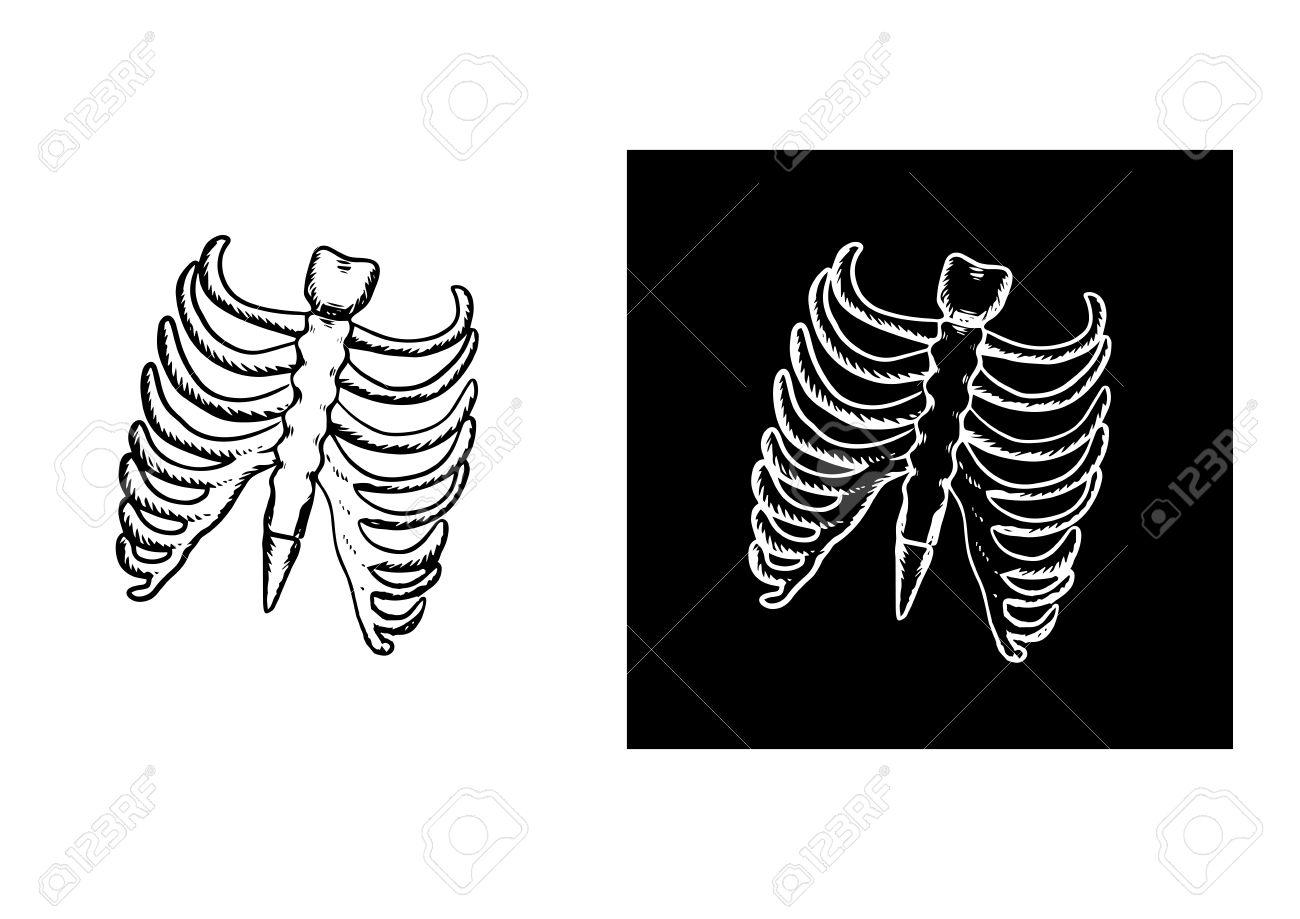 X-Ray Y El Esqueleto De La Caja Torácica Humana Con Costillas Y ...