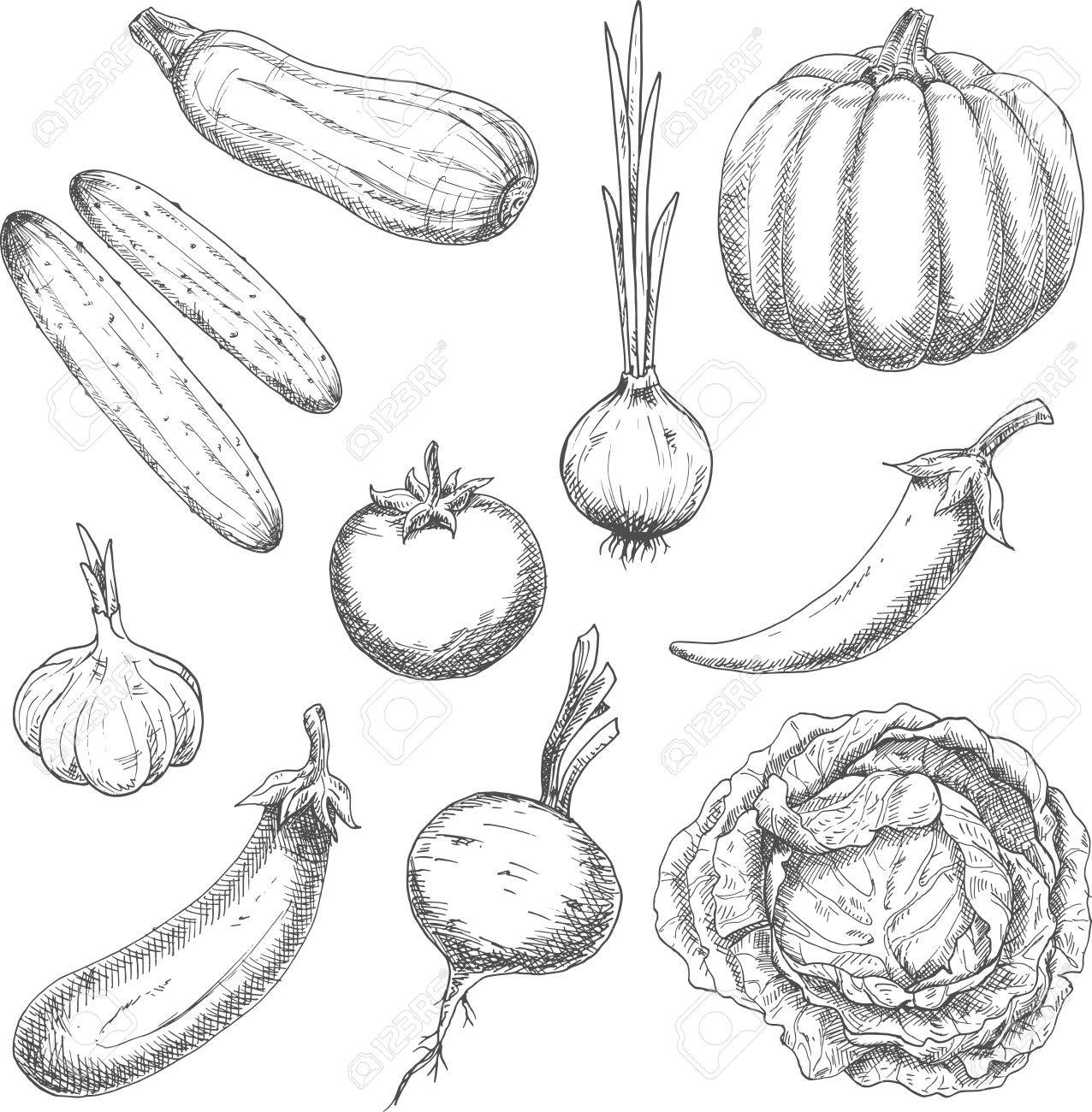 wholesome organically grown farm vegetables sketch symbols with