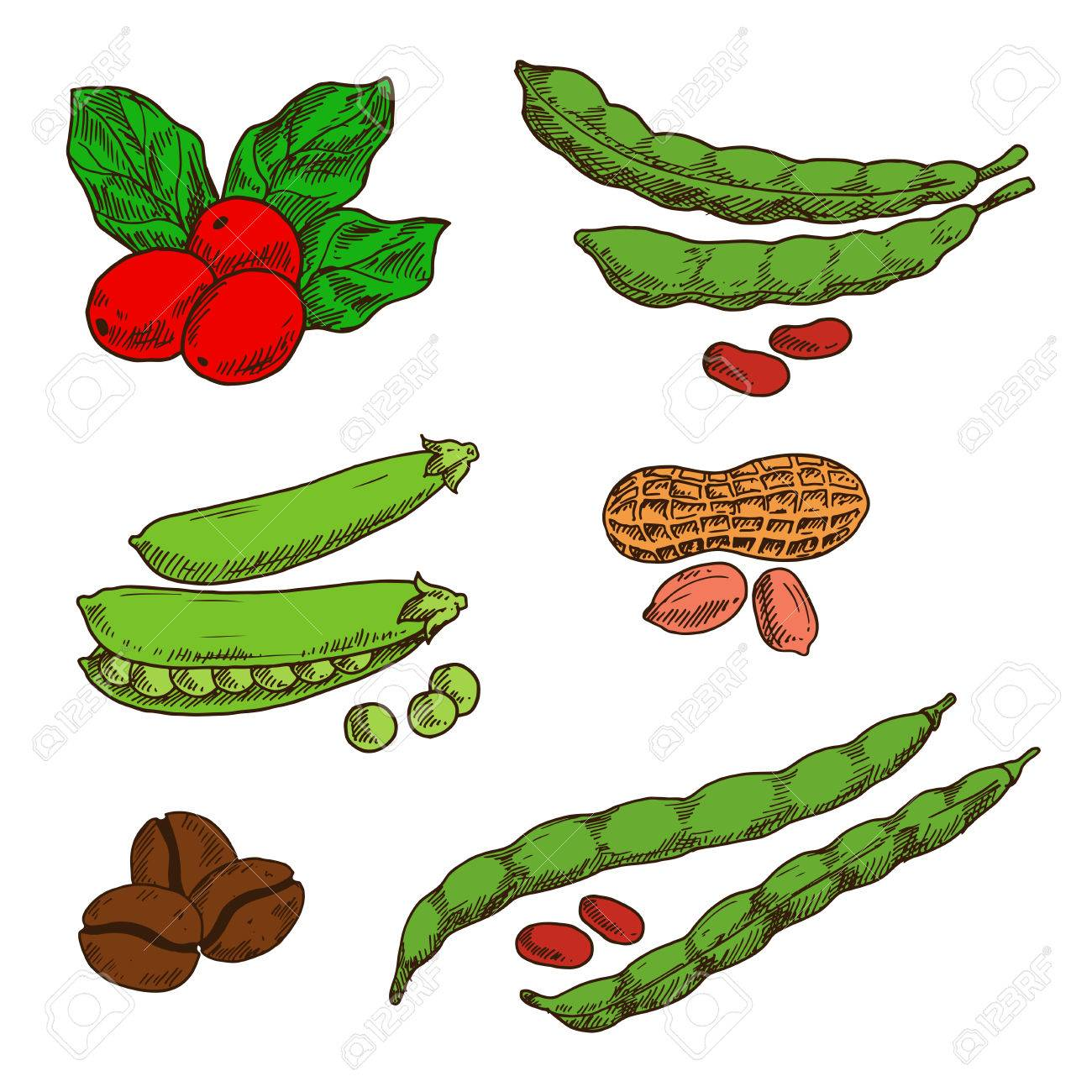 Healthful And Nutritious Peanuts Green Pods And Grains Of Sweet