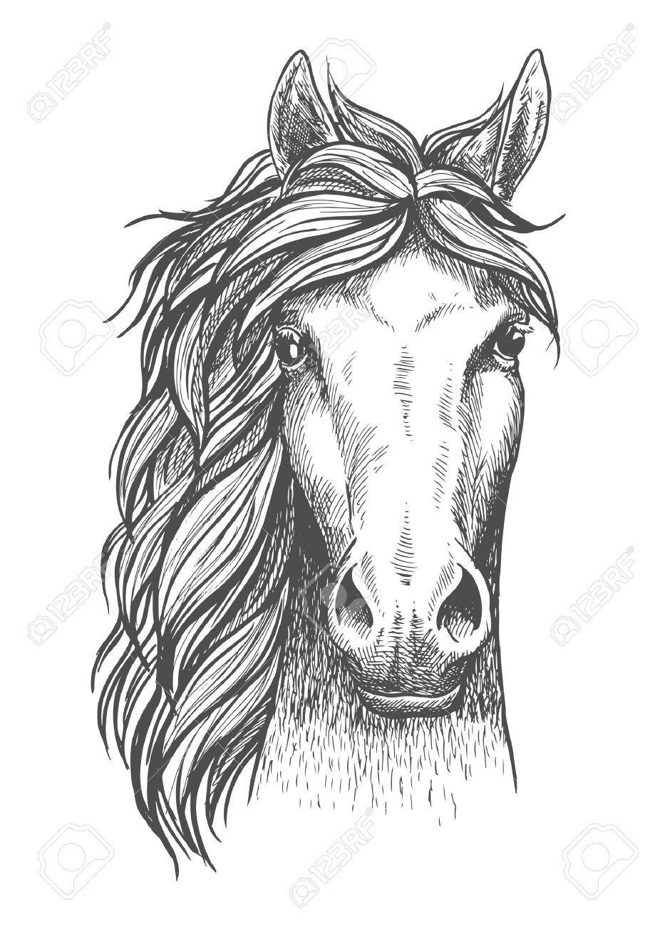 Beautiful Arabian Stallion Sketch Icon For Horse Breeding Symbol Royalty Free Cliparts Vectors And Stock Illustration Image 59261809