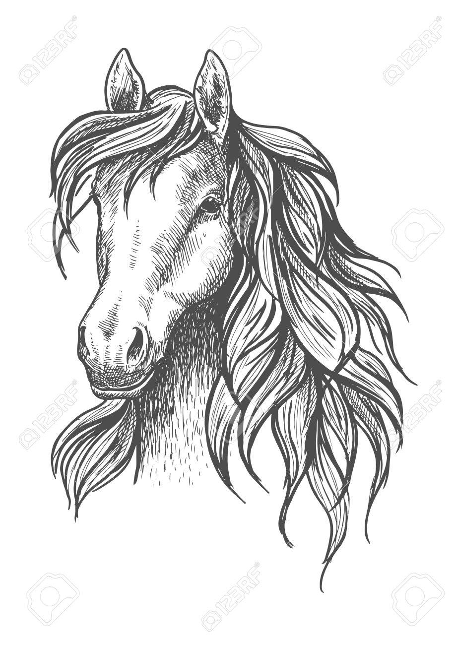 Young Horse Head Sketch With Calm Look And Beautiful Wavy Mane Royalty Free Cliparts Vectors And Stock Illustration Image 59602311