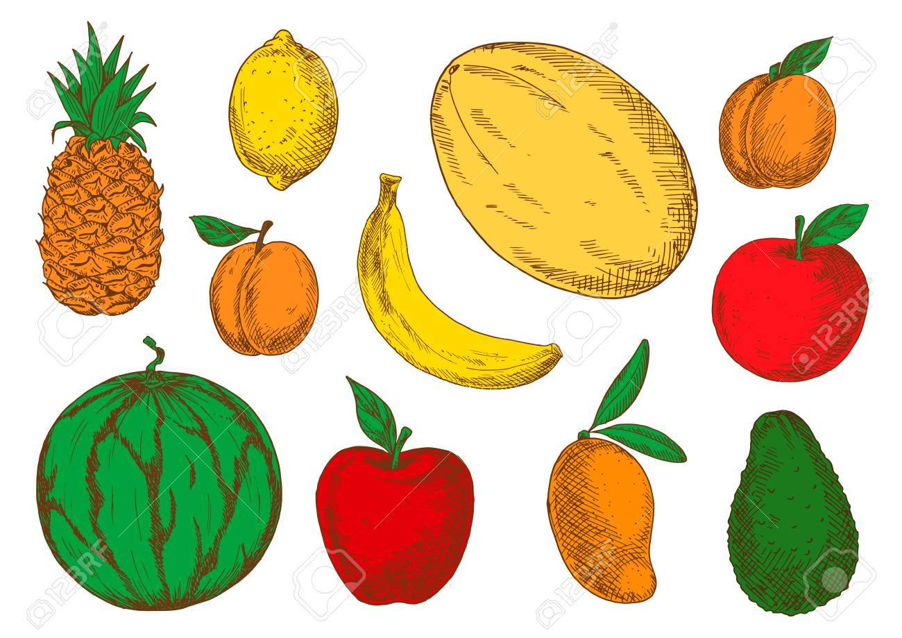 colorful sketch of vegetarian fruits. exotic mango and raw avocado
