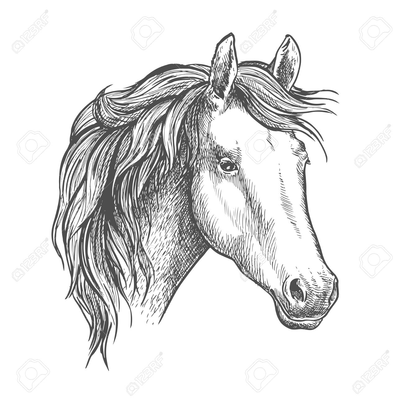 Arabian Horse Sketch Of A Head Of Purebred Mare Horse Racing Royalty Free Cliparts Vectors And Stock Illustration Image 60305306