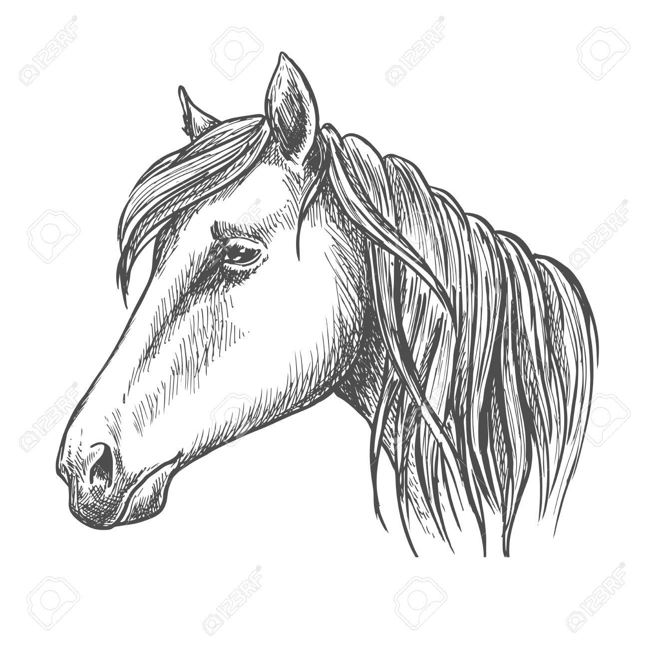 Riding Horse Head Sketch With Long Mane Horse Racing Equestrian Royalty Free Cliparts Vectors And Stock Illustration Image 60305309