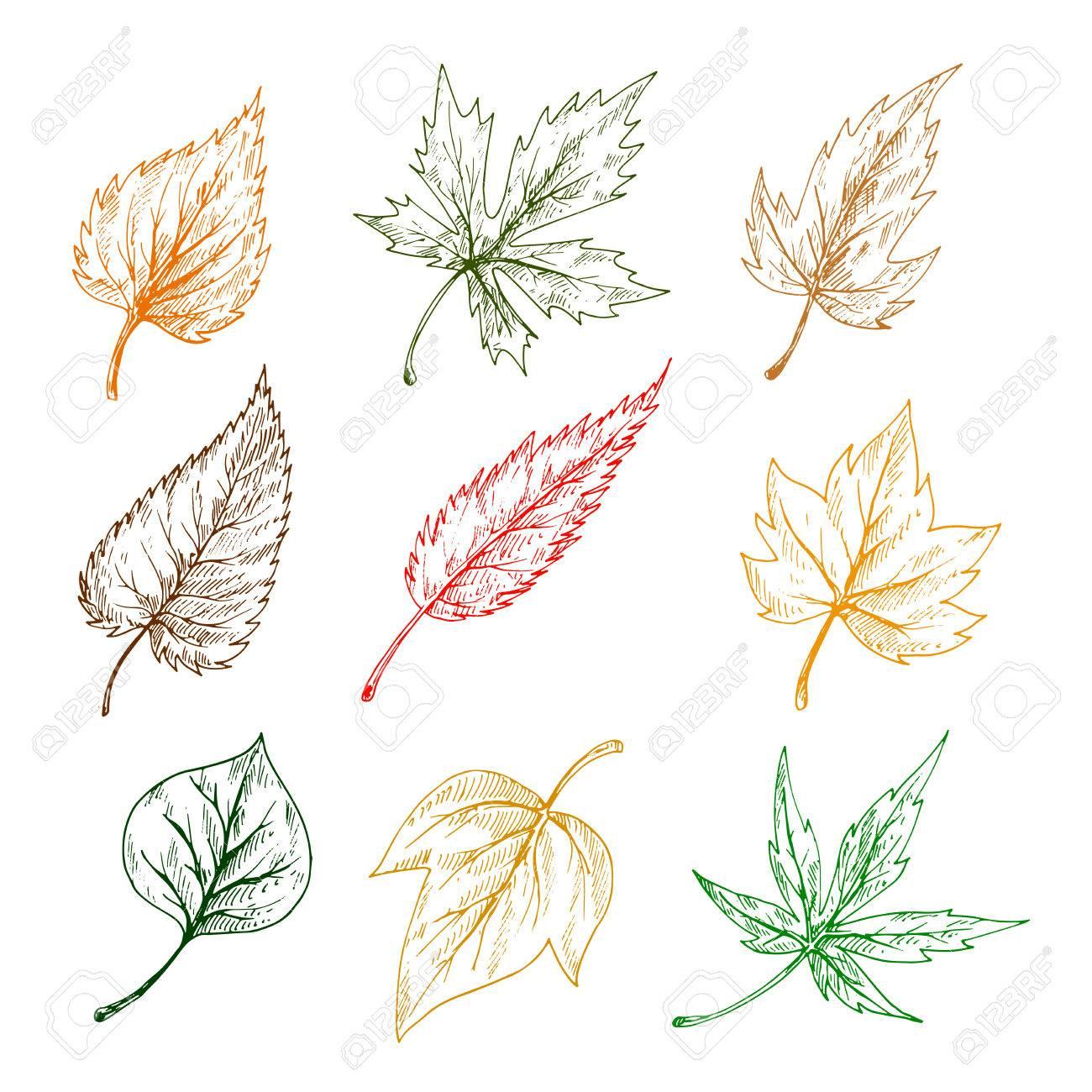 Las Hojas De Los árboles Y Plantas Iconos Del Lápiz De La Hoja De